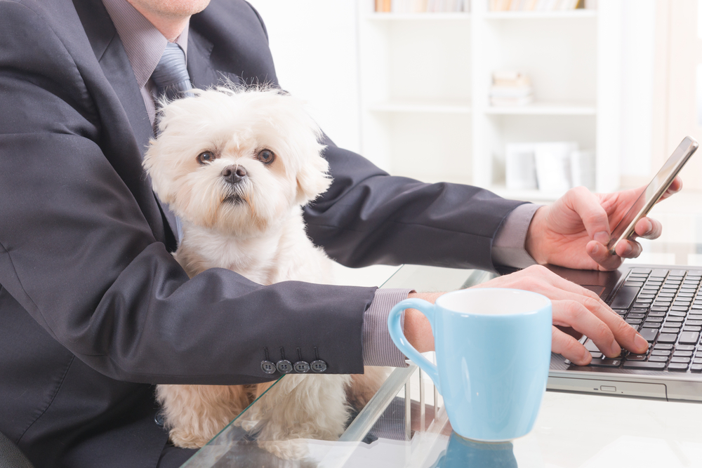 Should you allow dogs in the office?