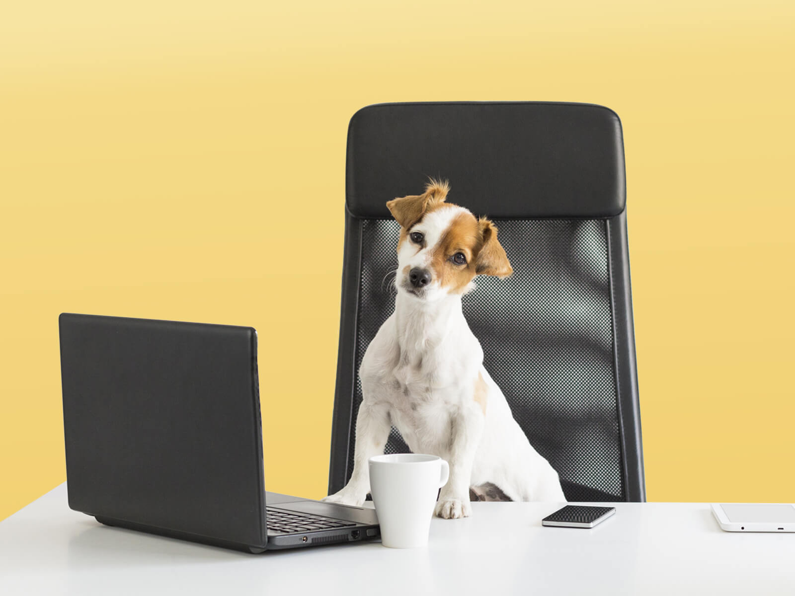 Puppy love: How to create a dog-friendly office